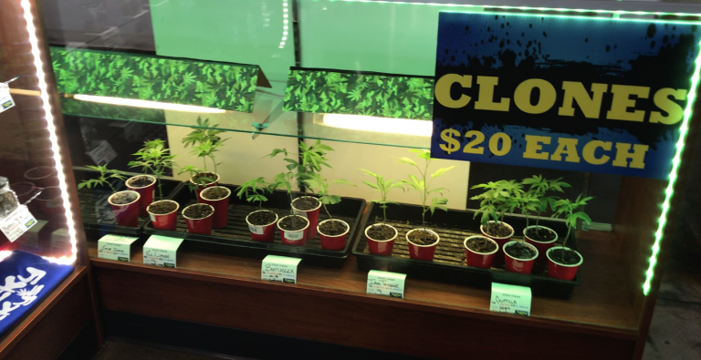 clones at a dispensary near me